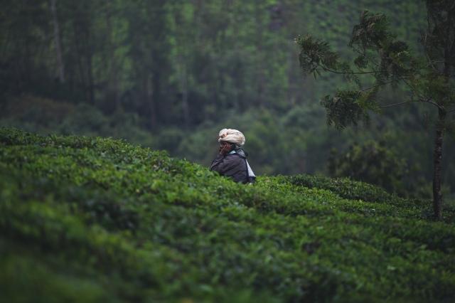 India_by_fejesbence_Kerala-10