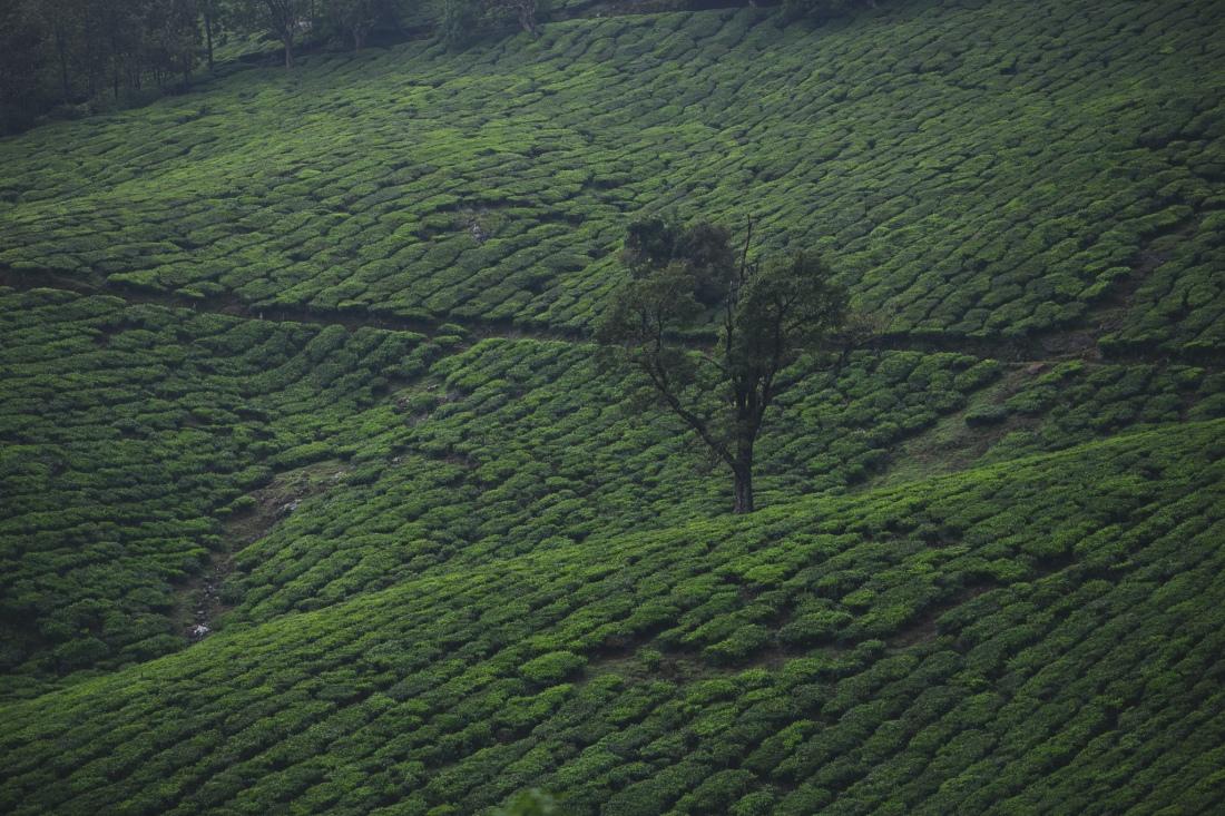 India_by_fejesbence_Kerala-5