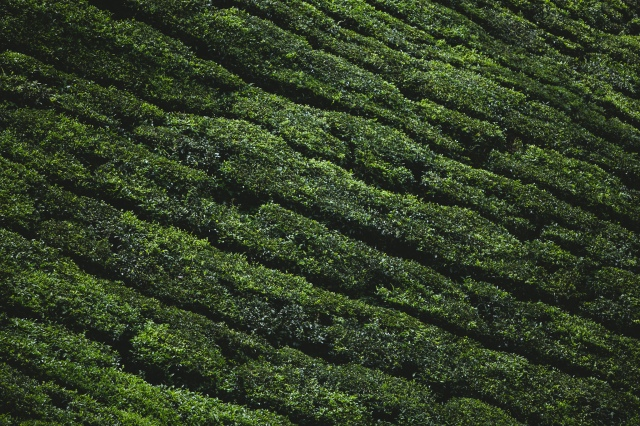India_by_fejesbence_Kerala